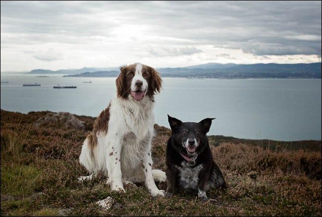 Doi câini care stau calm în fața unei stânci au vedere